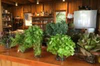 Fresh Herbs and Greens grown on site in the kitchen at the eco resort