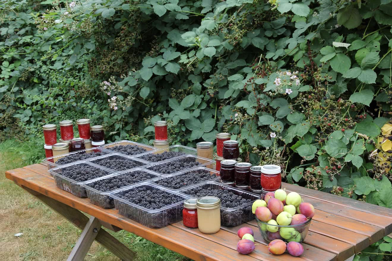 We harvest and can apples, pears and blackberries from our launch site on Okeover Inlet