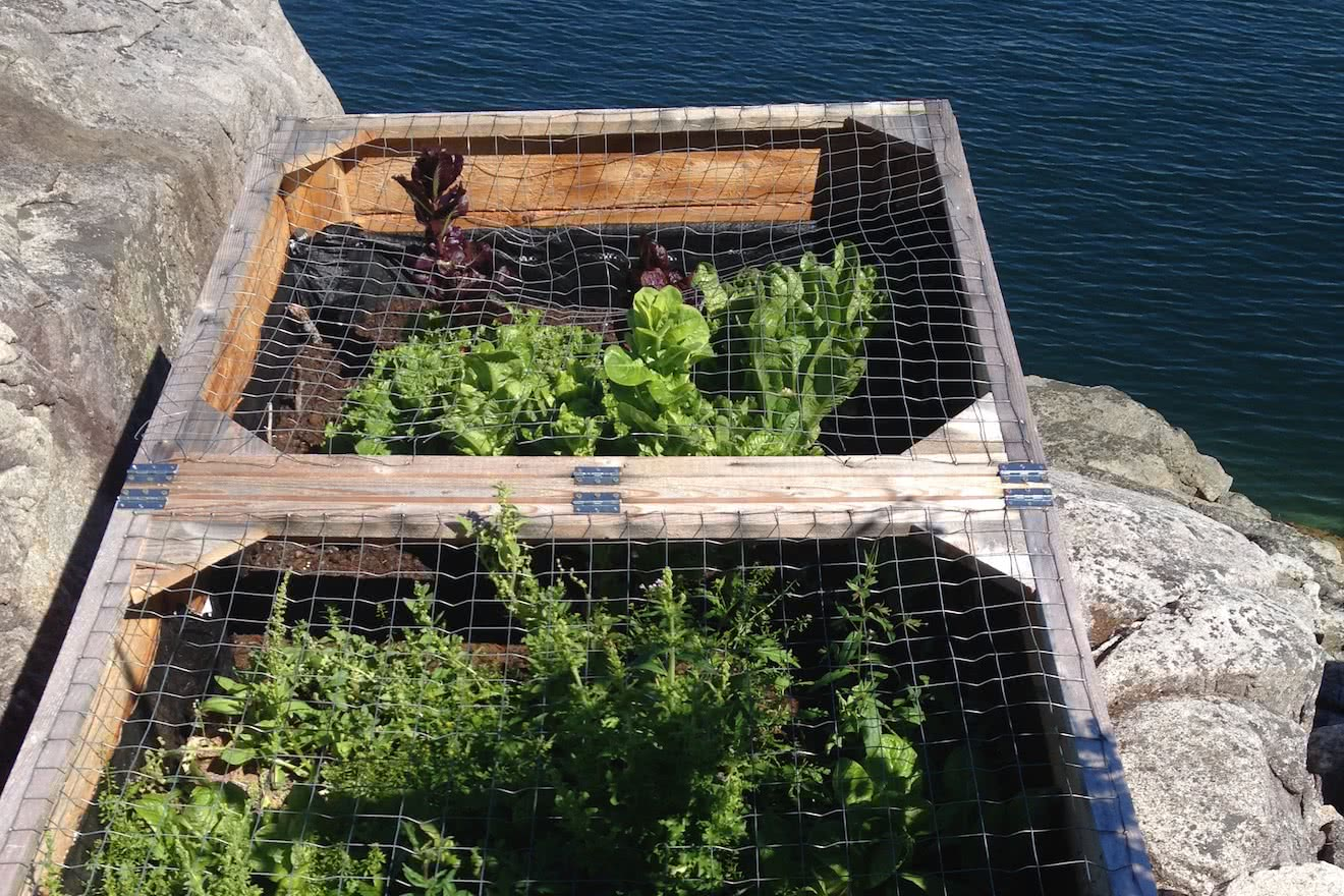 We grow our own salad greens on the point at Cabana Desolation Eco Resort